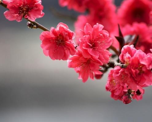 Blüten die aufgehen